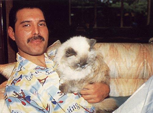 Freddie Mercury 36 Cool Hd Wallpaper
